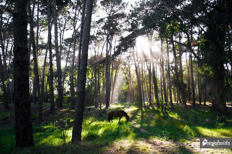 Bosques en La Paloma.