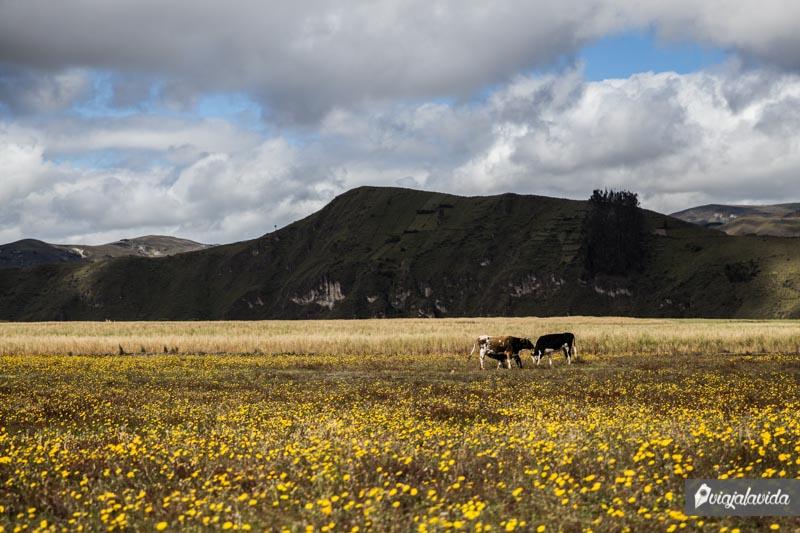 Paisajes de la Sierra ecuatoriana.
