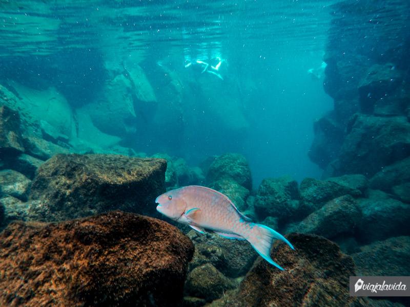 Peces grandes en Las Grietas, Santa Cruz