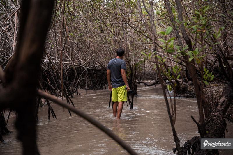 El Estero, para visitar en Isabela