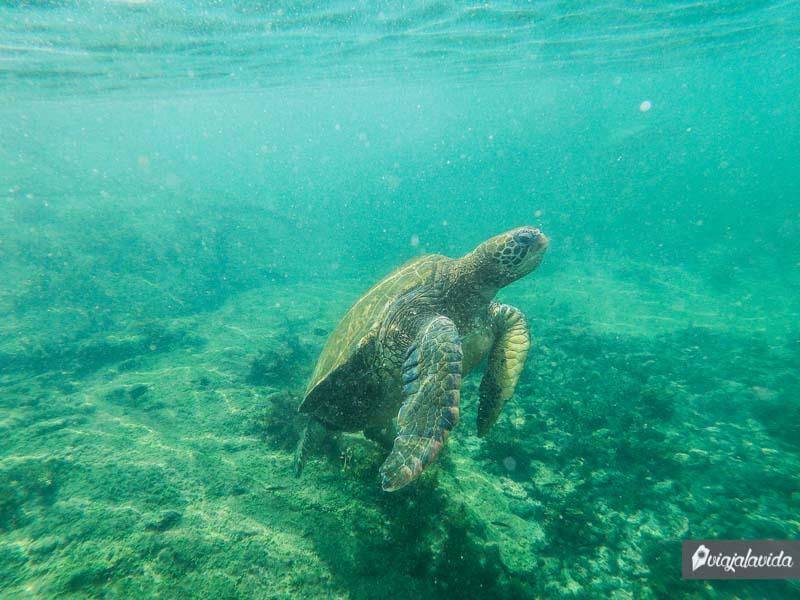 Tortuga marina en Galápagos