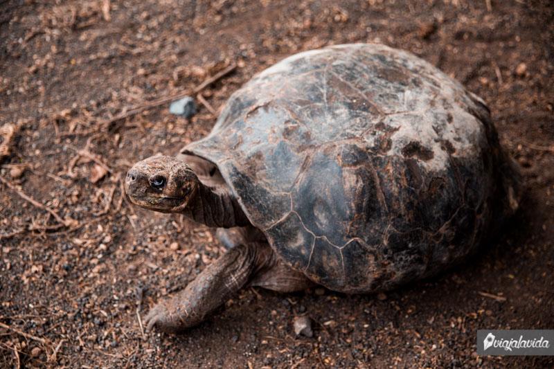 Centro de Crianza de tortugas en Isabela