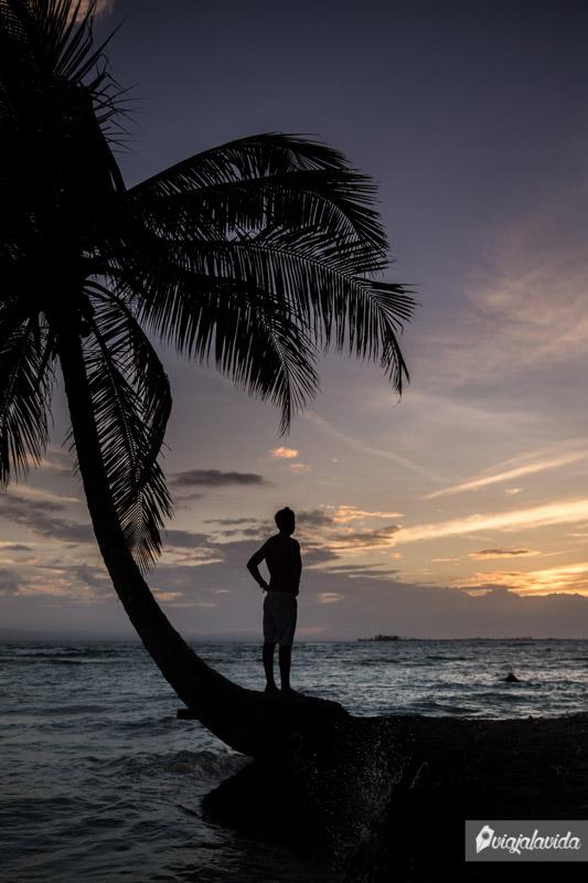 Parado sobre una palmera en la Isla Perro Grande, San Blas.