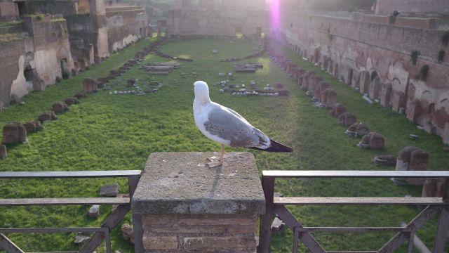 Una paloma en el Hipódromo de Domiciano.