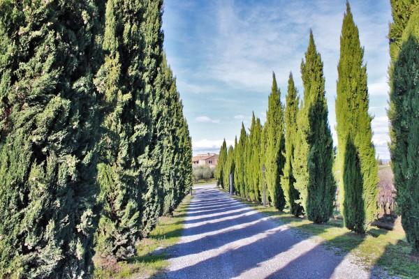 Pienza, Val d´Orcia, Tuscany
