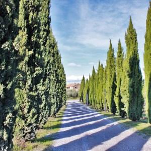 De carro pela Toscana: conhecendo San Quirico d'Orcia, Pienza, Montalcino e Montepulciano