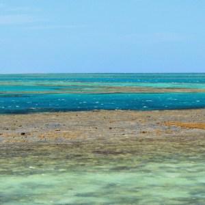 Grande Barreira de Corais: confira dicas de como conhecer esse incrível paraíso que fica na Austrália