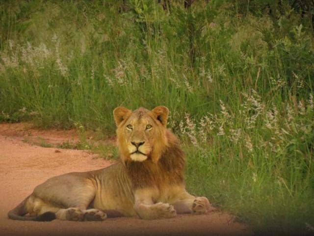 Roteiro para África do Sul e Moçambique_safari_Viajando bem e barato