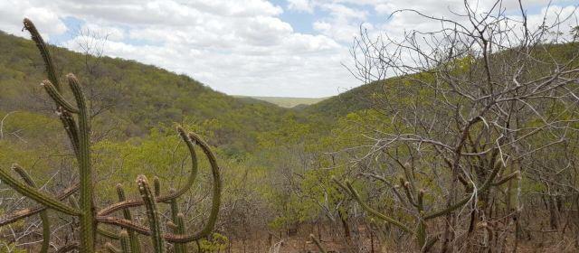 Rota do Cangaço: turistas fazem o trajeto da volante que matou Lampião
