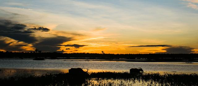Rumo Norte Expedições: nova parceria do blog para passeios na Ilha de Marajó