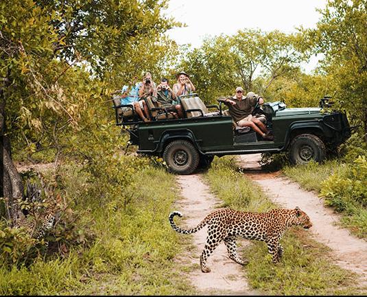 Safari agência Viajar com crianças