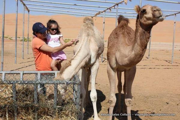 Fazenda-de-camelos-deserto-Abu-Dhabi
