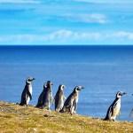 A agência Viajar com Crianças lança grupo para as férias de Janeiro na Patagônia Argentina
