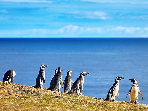 pinguinera-ushuaia