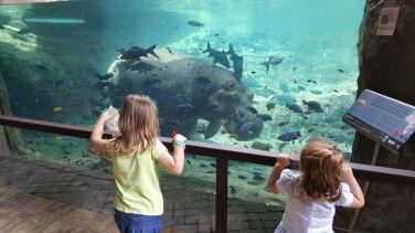 mirando los hipopótamos
