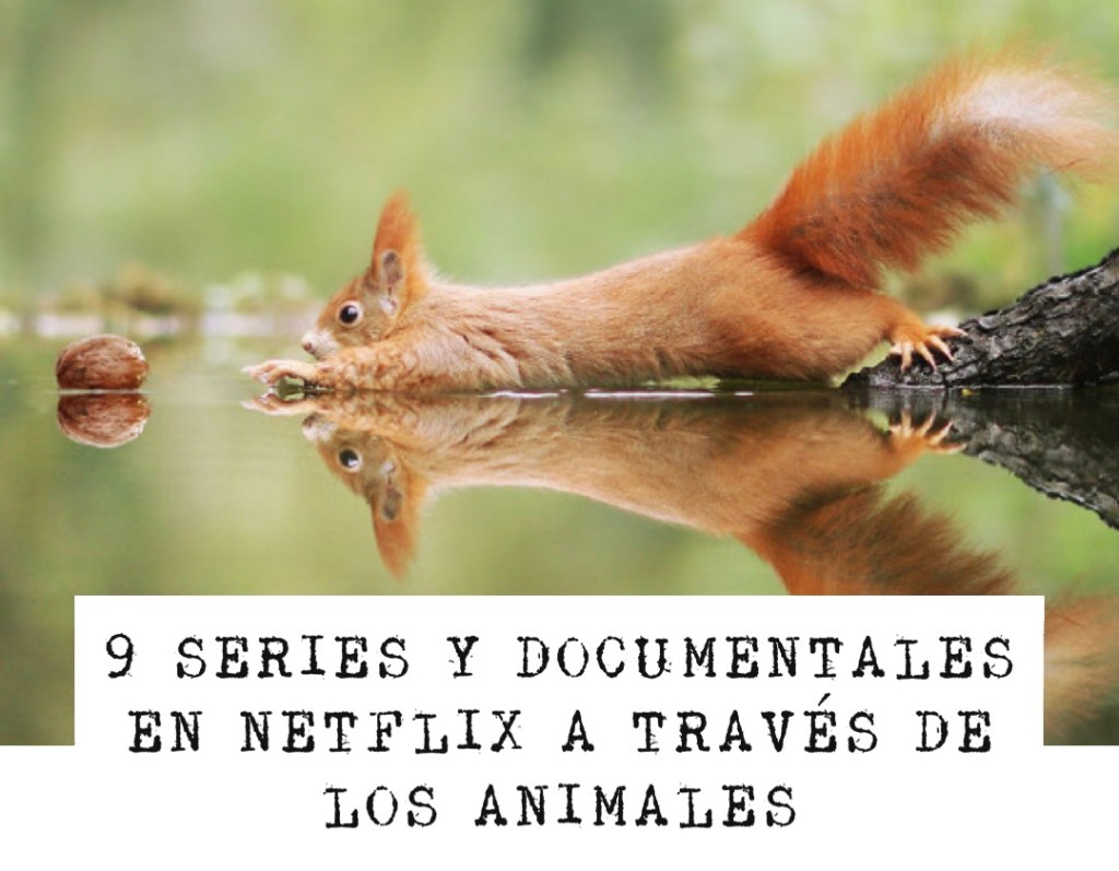 9 series y documentales