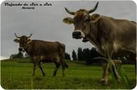 Alemania rural