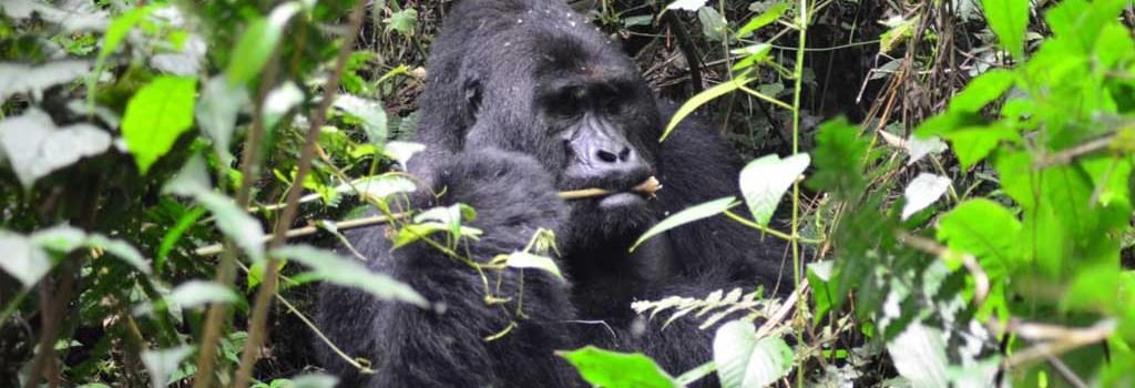 21 imágenes que resumen mi viaje por Uganda