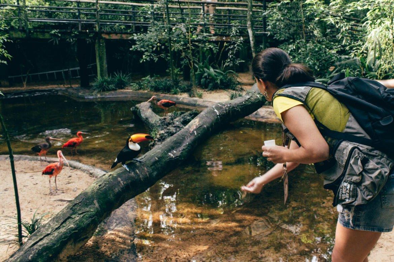 Alimentando os tucanos no viveiro Aves de Rios e Mangues - Backstage Experience, Parque das Aves