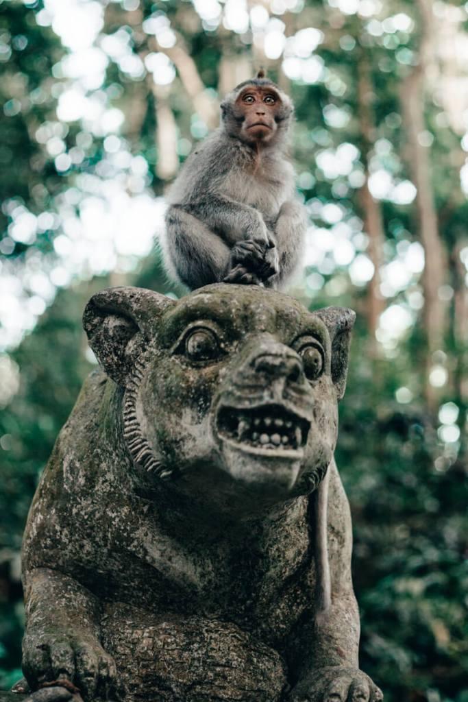 Monkey Forest - macaco sobre uma estátua