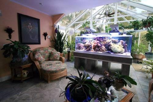 aquario_decoração
