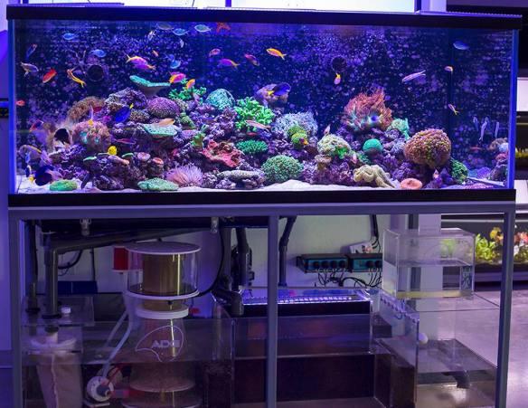 aquario_marinho_agua_salgada_equipamentos