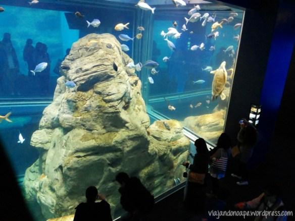 aquario_Osaka