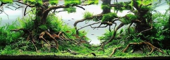 aquario_plantado_aquapaisagismo (4)