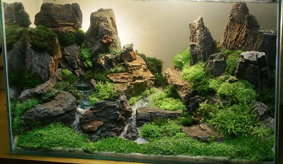 aquario_plantado_aquapaisagismo (6)