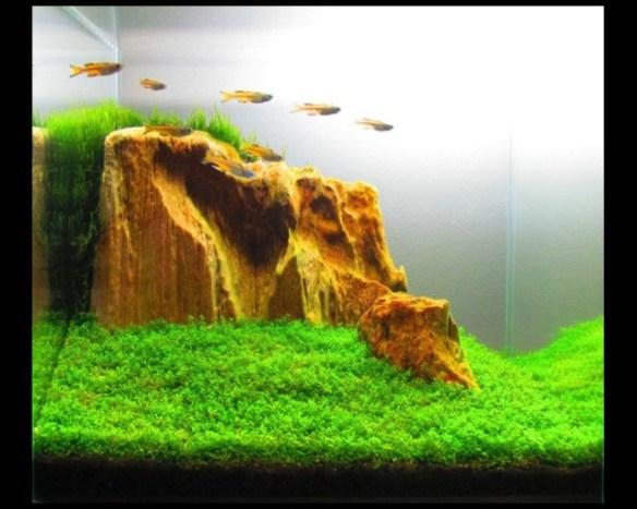 aquario_plantado_aquapaisagismo_13