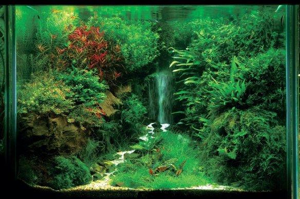 aquario_plantado_aquapaisagismo_17