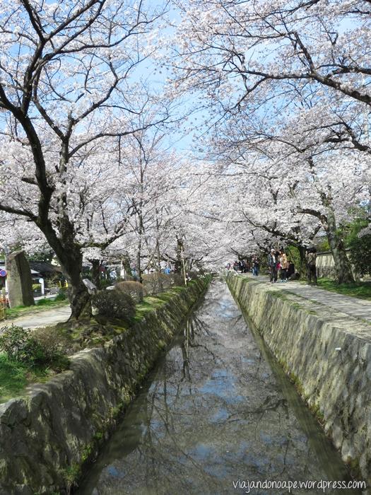 caminho_do_filósofo_Japão_philosopher's path_Japan_sakura_cerejeiras