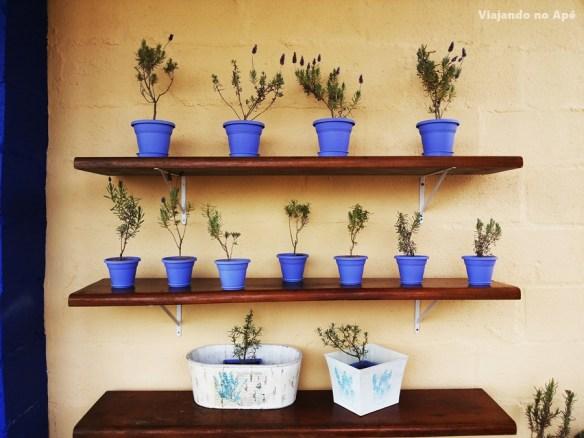 vasos de plantas cores iguais decoraçao prateleiras plantas