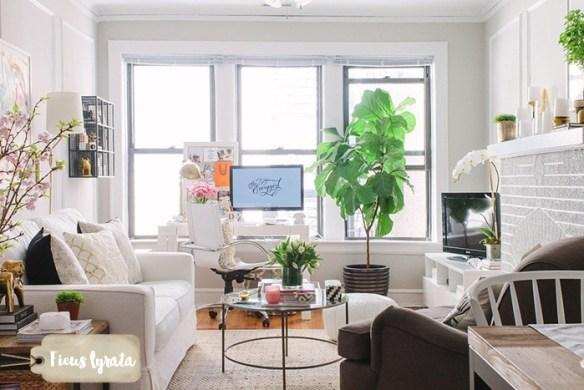 ficus-lyrata-decoracao-plantas-dentro-de-casa-ambientes-internos-4
