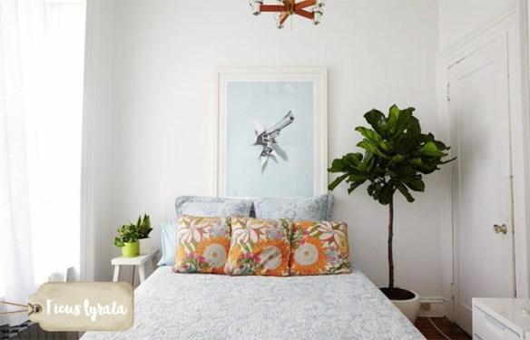 ficus-lyrata-figueira-lira-plantas-dentro-de-casa-ambientes-fechados-internos-decoracao2