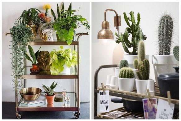 carrinho bebidas plantas como usar decoracao