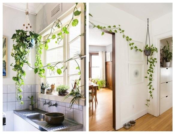 decoracao jiboia vaso suspenso plantas ambientes internos plantas pendentes
