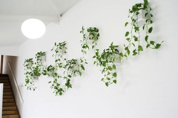 planta jiboia ramos pela parede decoracao plantas dentro de casa decoracao criativa