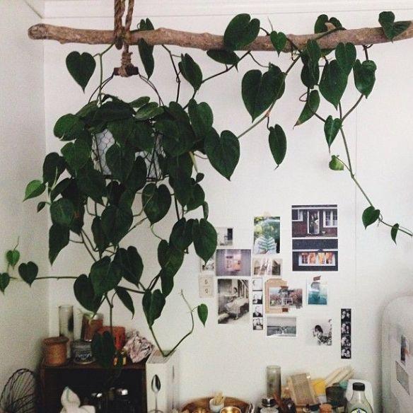 plantas ambientes internos jiboia vaso suspenso decoracao plantas apartamento