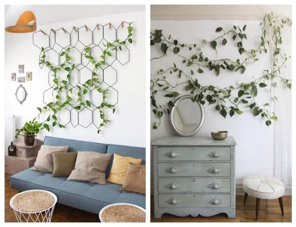 plantas decoracao jiboia sala pendente ramos parede plantas ambientes internos
