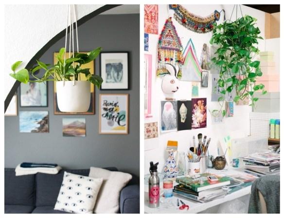 plantas na decoracao plantas para ambientes internos jiboia plantas suspensas pendentes teto parede