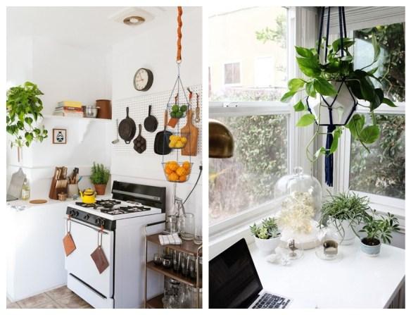 plantas na decoracao plantas para ambientes internos jiboia plantas suspensas pendentes