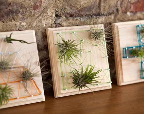 suporte plantas aereas madeira decoracao