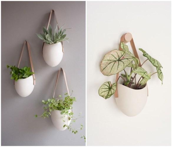 plantas suspensas