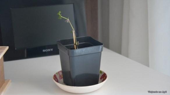 vaso desenho posca (2)