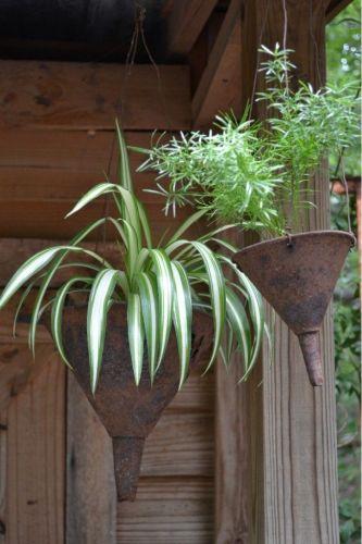vaso funil plantas suspensas