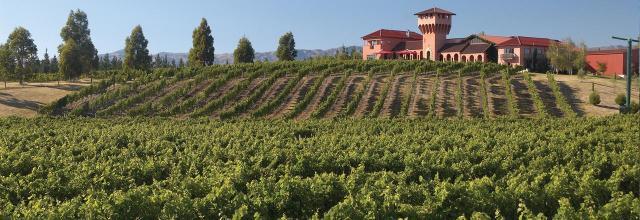 vinos nueva zelanda marlborough