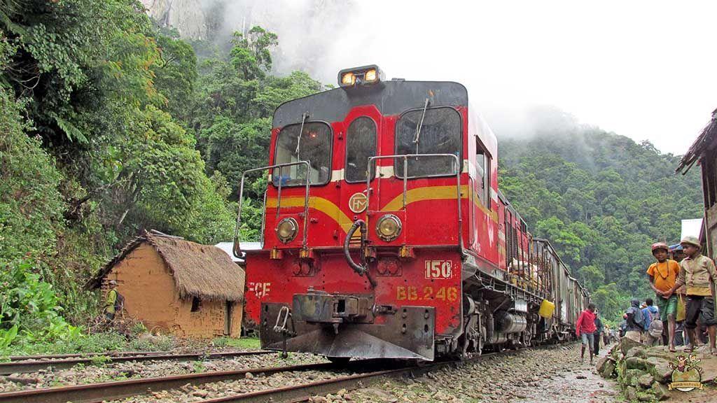 Tren de la selva madagascar 3