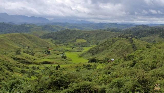 Tren de la selva madagascar paisaje