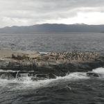 Isla de los lobos Marinos - Canal Beagle - Ushuaia